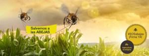 abejas-homeGP